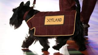 Scottie dogs stars of Commonwealth Games opening show