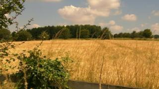 Fields near Pitt where Linden Homes wants to build 500 homes