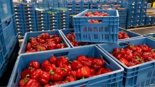 Peppers at Zaltbommel fruit and vegetables market, Netherlands