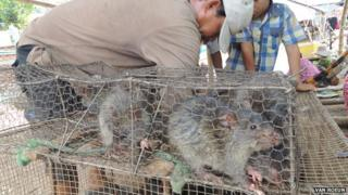 Picture of rats being sold at the Cambodia-Vietnam border