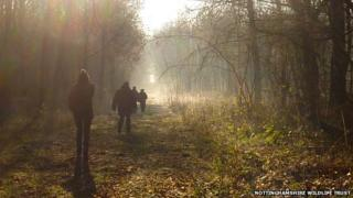 Walkers in mist at Gamston Woods Nature Reserve