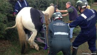 It is understood the four-year-old horse got into trouble when it tried to jump the steel gate to get into a different paddock.