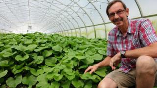 blake anderson wasabi farmer