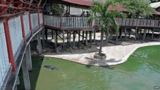 This picture taken on 15 September 2014 shows crocodiles in and outside a pond at the farm where a woman killed herself in Samut Prakarn, outside Bangkok.