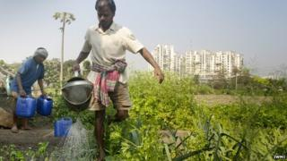 Urban farmers, India (Image: IWMI)