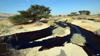 Oil spill in Israel. Photo: 4 December 2014