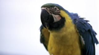 A macaw parrot (generic)