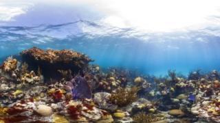 Reef in Bermuda