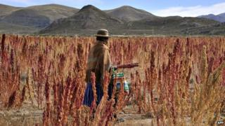 Quinoa farmer in Bolivia