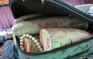 Ivory smuggled in a suitcase