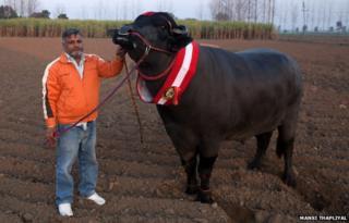 Yuvraj and Karamveer Singh