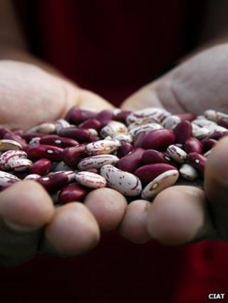 Handful of beans (Image: CIAT)