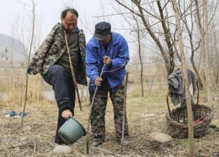 Planting the trees