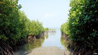 Mangrove forest, Sri Lanka (Image: Teng Wei)