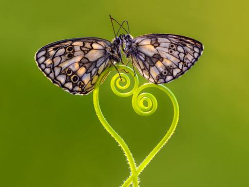 Dos mariposas en una rama