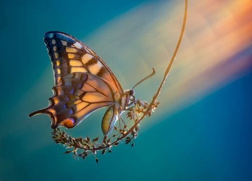 Mariposa descansa en una rama
