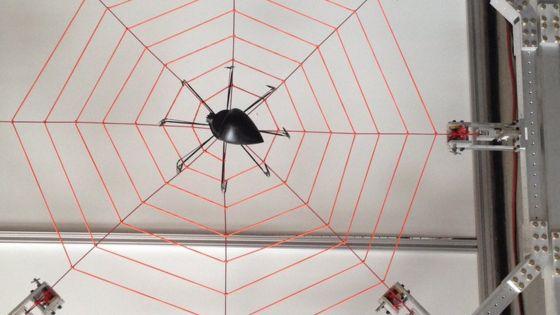Giant web probes spider sensation