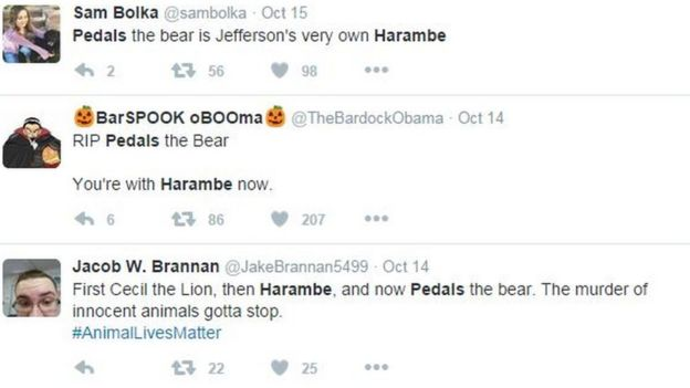 Pedals the Bear social media reaction