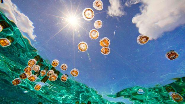 Águas-vivas