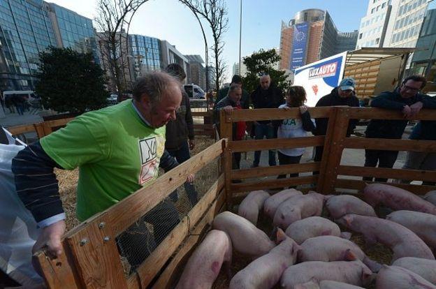 протести фермерів у Брюсселі