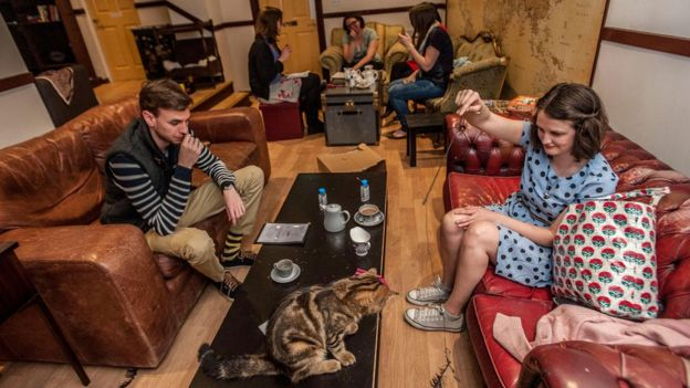 Are Cat Cafes Good for Cats?