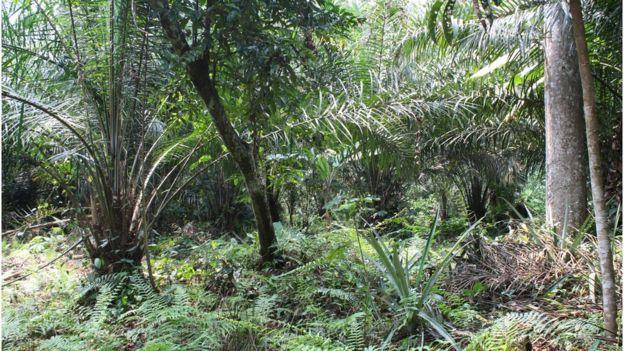 Rainforest, Congo Basin (Image: Rachel Agnew/Rainforest Foundation UK)