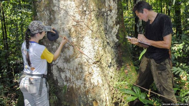 Forest survey in Mato Grosso