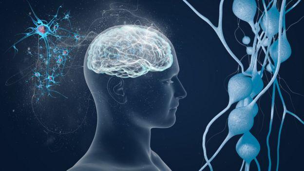 Ilustración del cerebro.