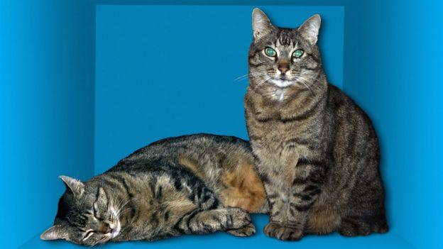Ilustración de la paradoja del gato