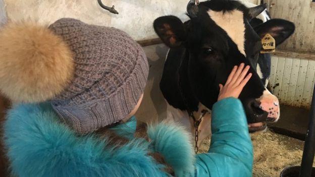 Criança com vaca