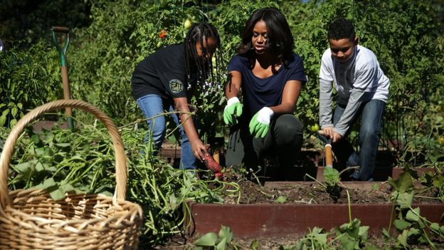 U.S. first lady Michelle Obama (C) participates with local students in the annual fall harvest of the White House Kitchen Garden October 6, 2015 at the White House in Washington, DC