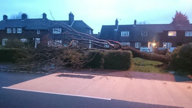 Fallen tree in Epsom