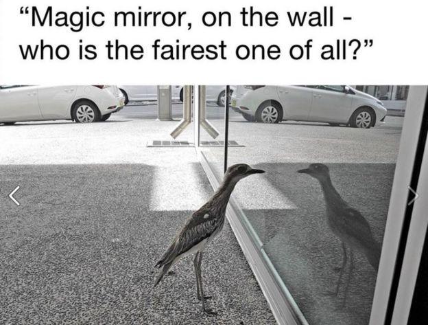 牆上的魔鏡,誰是最好看的?
