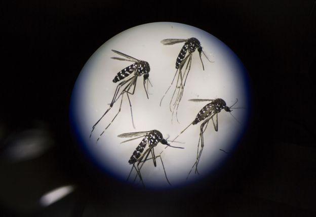 Mosquitos