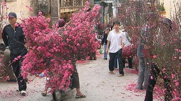 Chở hoa đào ra chợ bán ngày Tết