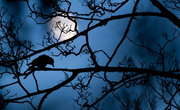 Crow in tree by Gideon Knight