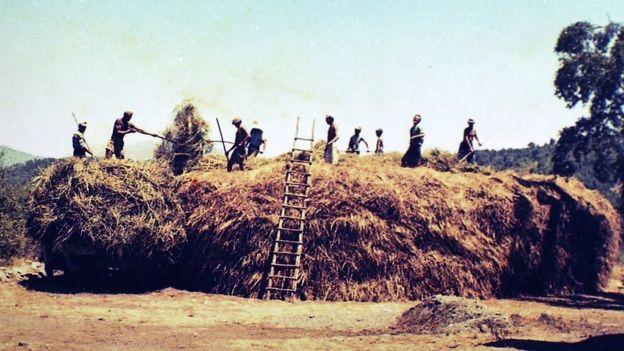 Agricultura en Colonia Dignidad