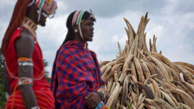 Kenyan women pass a pyre of ivory in in Nairobi National Park, Kenya, 28 April
