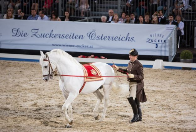 Presentation of the Spanish Riding School Lippizaner Horses at the gala event 450 years Spanische Hofreitschule on 26 June 2015 in Vienna, Austria