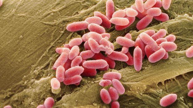 Fotografía ampliada de bacterias