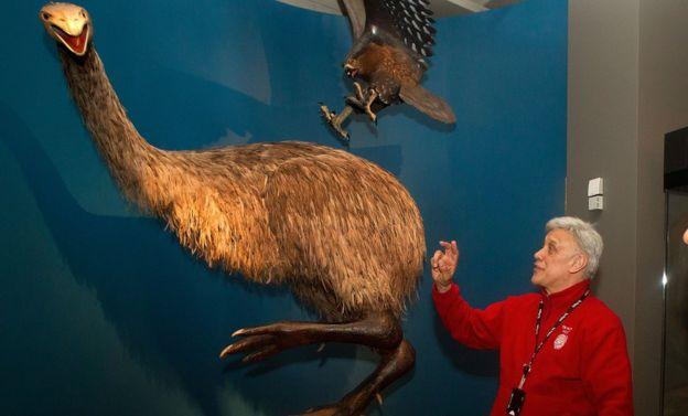 Bones of giant bird
