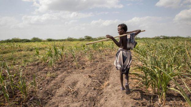 An Afar boy walks through failed crops and farmland in Magenta area of Afar, Ethiopia, on Tuesday, Jan. 26, 2016.