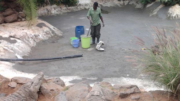 A worker at the crocodile farm