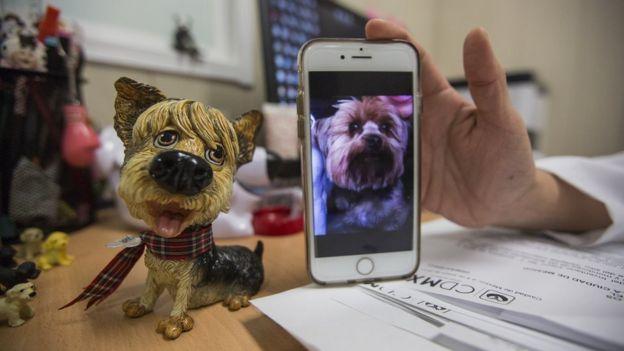 Foto do cachorro Gary no celular ao lado de boneco