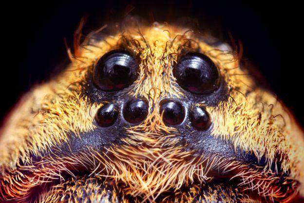 Ojos de una araña
