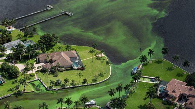 Algas em St. Lucie