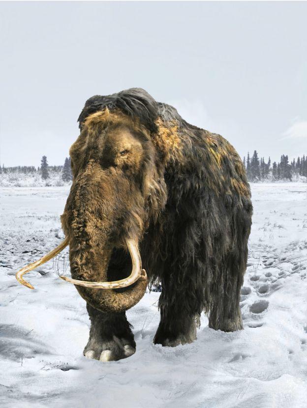 Ilustração de mamute