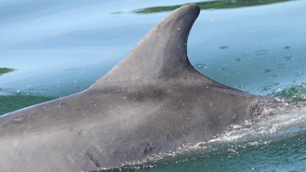 El lado izquierdo del delfín, completamente ileso.