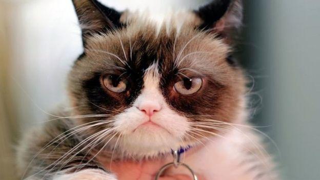 Imagen de gato furioso.