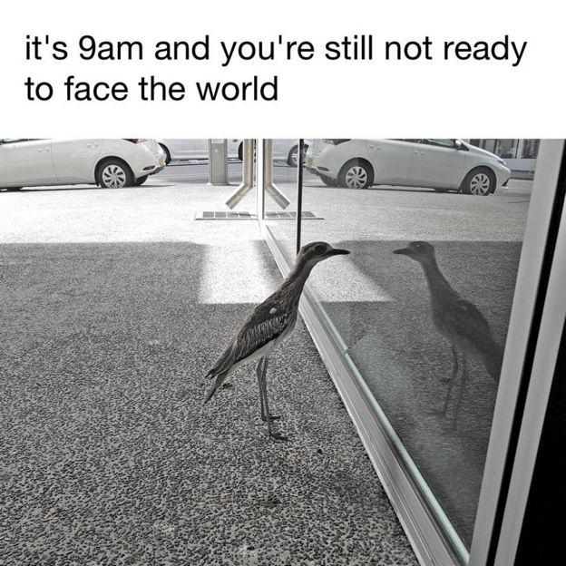 Kuşun fotoğrafıyla yapılan esprilerden biri: Sabahın 9.00'u ve sen hala dünyayla yüzleşmeye hazır değilsin.